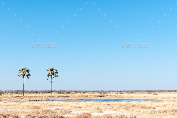 Two Palms waterhole at Fischers Pan in Northern Namibia