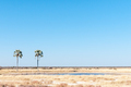 Two Palms waterhole at Fischers Pan in Northern Namibia - PhotoDune Item for Sale