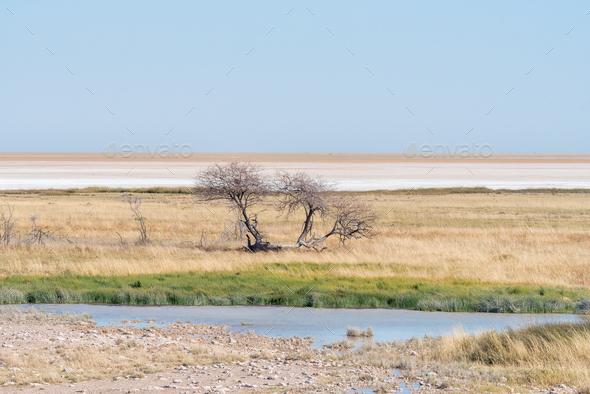 Waterhole, dead tree and the Etosha Pan