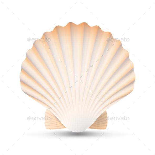 GraphicRiver Scallop Seashell 20471364
