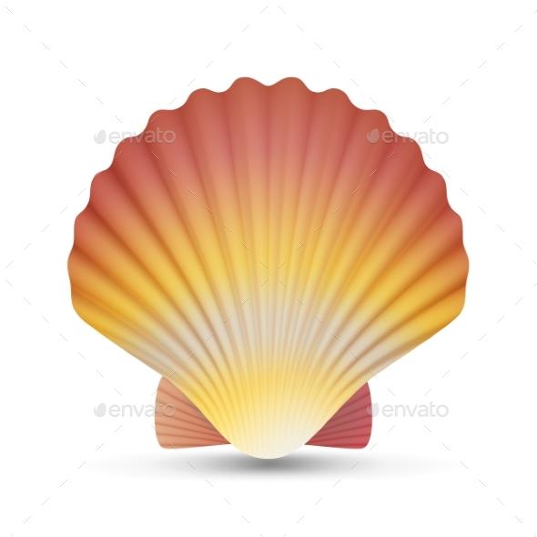 GraphicRiver Scallop Seashell Vector 20471378