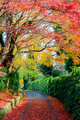 Beautiful autumn leaves on the road, Kyoto, Japan - PhotoDune Item for Sale