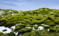 Eldhraun lava fields Covered With Moss,  Southern of Iceland - PhotoDune Item for Sale