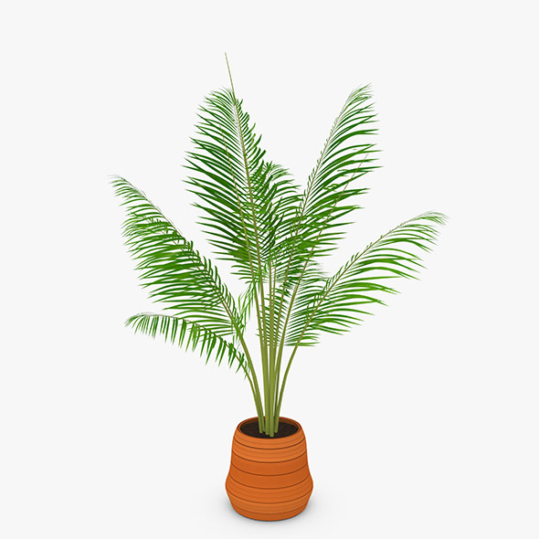 3DOcean Palm Tree 20474328