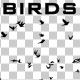 Birds Silhouette - VideoHive Item for Sale