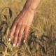 Woman with White Nails with His Back To the Viewer in a Field of Gold Wheat Touched