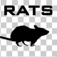 Rats - 3 Scene - VideoHive Item for Sale
