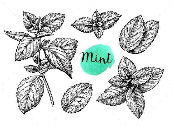 Mint Sketch Set - Food Objects