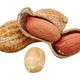 Peanuts (Arachis hypogaea) on a white background - PhotoDune Item for Sale
