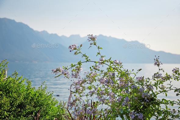 Geneva lake embankment
