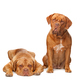 pet - PhotoDune Item for Sale