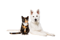 dog and cat - PhotoDune Item for Sale