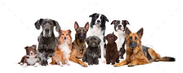 group of dogs - Stock Photo - Images