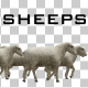Sheeps - VideoHive Item for Sale