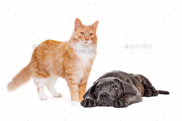 cat and dog - Stock Photo - Images