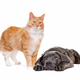 cat and dog - PhotoDune Item for Sale