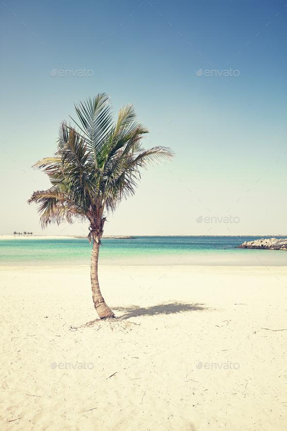 Palm on an empty beach, cross processing applied