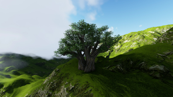Green Mountains and Tree