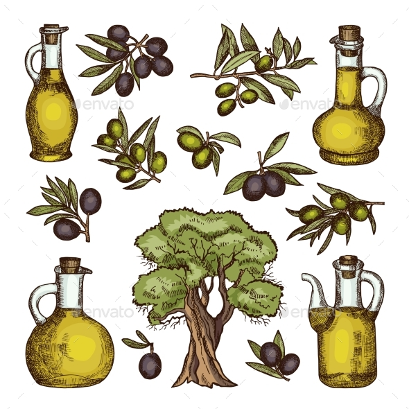 Colored Illustrations of Different Olive Products - Food Objects