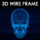 Human Skull 3D Wire Frame