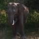 Elephant Eating Grass in Safari Park