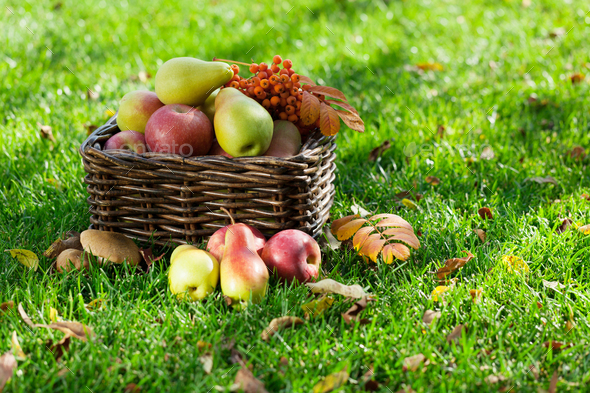 Autumn food