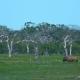 Srilankan Elephant Walking in Safari Park