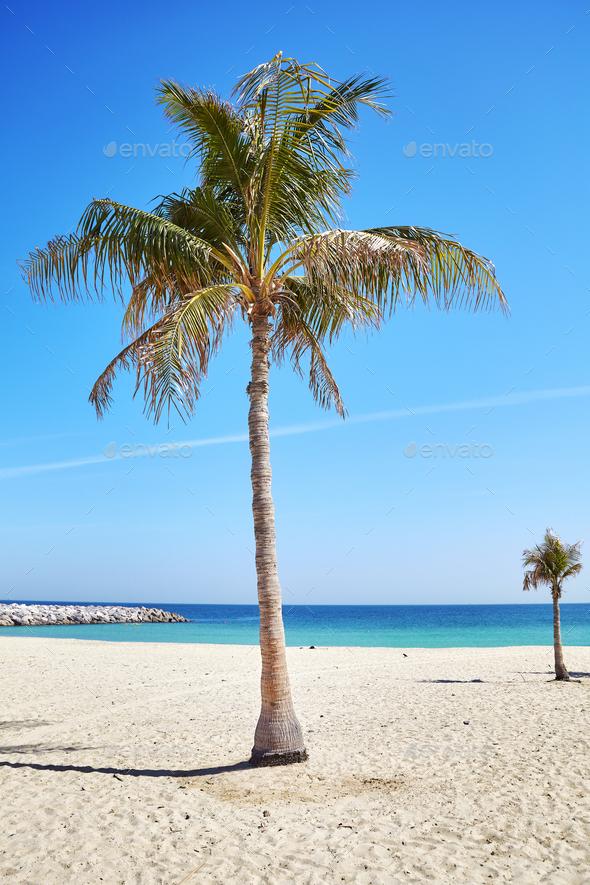 Palm trees on a beautiful beach.