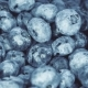Blueberries Rotating. Seamless Looping, . Fruit Background.
