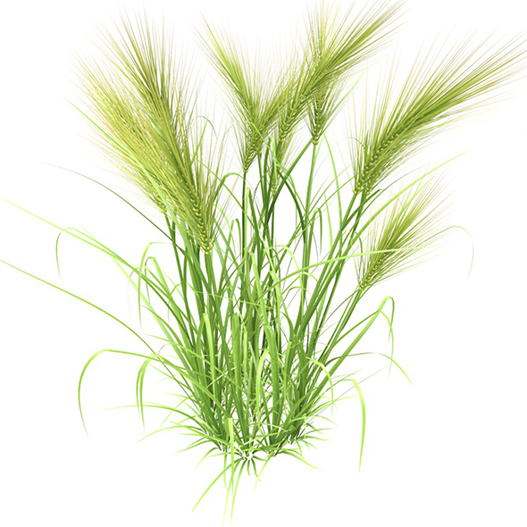 3DOcean Feather grass wheat 3D model 20486861