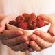 Crockery with raspberries in woman hands - PhotoDune Item for Sale