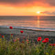 Seascape with poppies - PhotoDune Item for Sale
