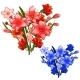 Two Bouquet of Red and Blue Lilies. Vector