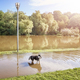 Dog in a park on a flooded path after the sunrise - PhotoDune Item for Sale