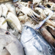 Fresh seafood at the fish market. - PhotoDune Item for Sale
