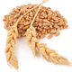 Ears of wheat and wheat grains - PhotoDune Item for Sale
