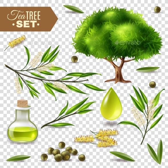 Tea Tree Set - Flowers & Plants Nature