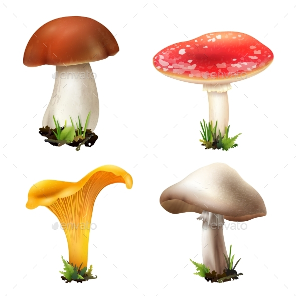 GraphicRiver Realistic Forest Mushrooms Collection 20493957