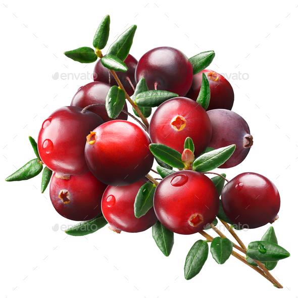 Cranberry bouquet, paths