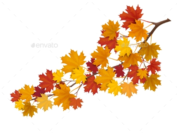 GraphicRiver Maple Branch with Yellow Leaves 20494668