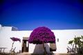 Particular architectural Masseria - PhotoDune Item for Sale