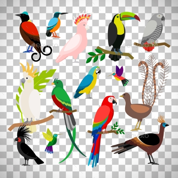 GraphicRiver Exotic Tropical Birds on Transparent Background 20496386