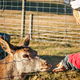 Cyclist feeding young deer through the fence - PhotoDune Item for Sale