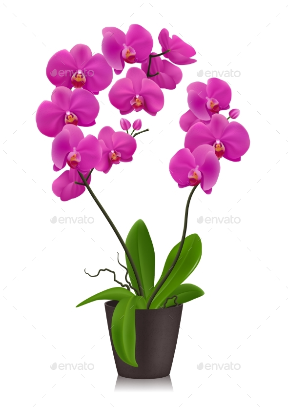 GraphicRiver Purple Orchid In Flowerpot 20497184