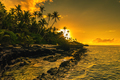 Coconut palm trees on beach during the sunrise on Upolu, Samoa I - PhotoDune Item for Sale