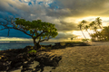Single tree and coconut palm trees in the sunset on Samoa Island - PhotoDune Item for Sale