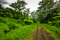 Road deep in the tropical dense forest - PhotoDune Item for Sale