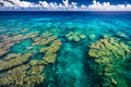 Tropical coral reef on Upolu island, Samoa, perfect for snorklin - PhotoDune Item for Sale