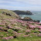 Skomer Island - PhotoDune Item for Sale