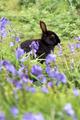 Black Rabbit - PhotoDune Item for Sale